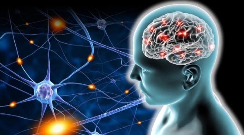 La plasticidad cerebral