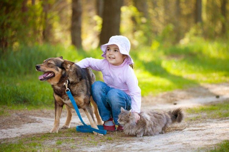 Las mascotas y los ojos del niño