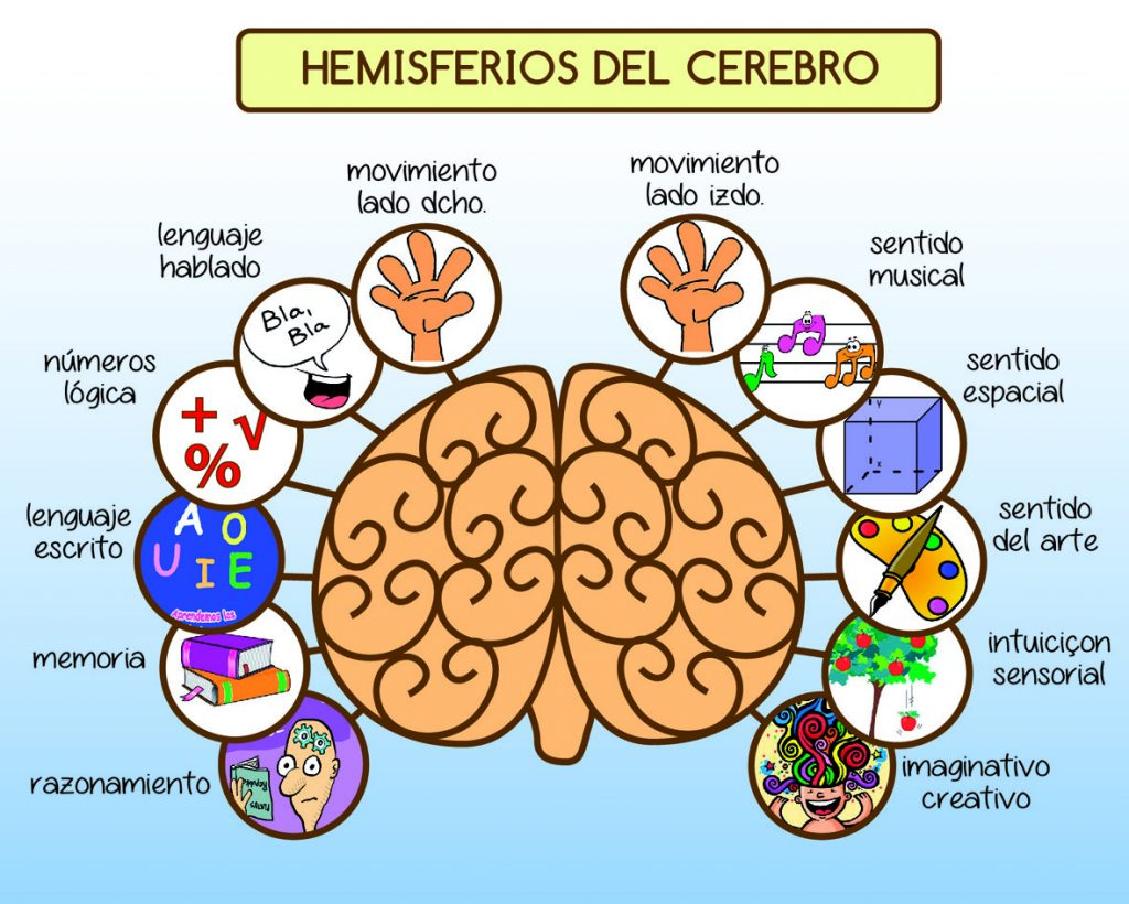 La lateralidad cerebral