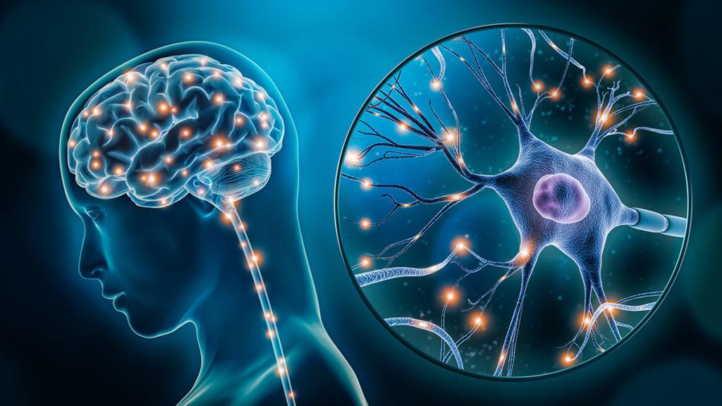 El cerebro humano crea estructuras de hasta 11 dimensiones